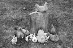 The gravestone of Nancy Luce, who loved her chickens as people.