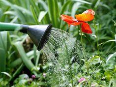 Consejos para mantener la belleza del jardín durante todo el verano