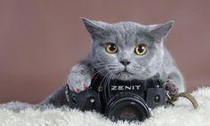 はいはい、カメラカメラっと。カメラに慣れきってしまった動物たちの面白画像特集 : カラパイア http://karapaia.livedoor.biz/archives/52183224.html