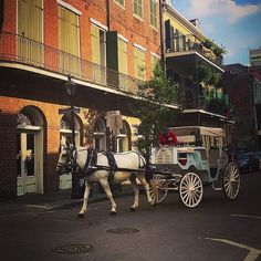 #Repost @sherina142  French Quarter New Orleans #neworleans #louisiana #horseandcarriage #frenchquarter