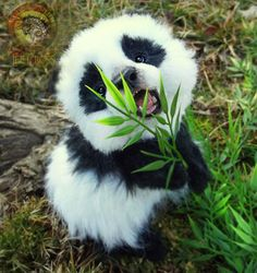Top 10 Cutest Baby Panda Videos Uncomplicated Tutorials Images Of Cute Pandas Cute Little Animals, Cute Funny Animals, Baby Animals Super Cute, Cute Animals Puppies, Cute Wild Animals, Happy Animals, Plush Animals, Animals And Pets, Animals Photos