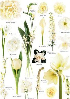 20. Peony 'Duchesse' / 21. Freesia 'Ballerina' / 22. Rose 'Akito' / 23. Dahlia / 24. Chrysanthemum / 25. Iris 'Casablanca' / 26. Hydrangea / 27. Mini calla lily / 28. Delphinium 'White Centurion' / 29. Cattleya orchid / 30. Gardenia / 31. Lily-of-the-valley / 32. Dendrobium orchid 'Big White' / 33. Tulip 'Casablanca' / 34. Sweet Pea / 35. Tuberose / 36. Amaryllis 'Mont Blanc' / 37. Rose 'Vendela' / 38. Snapdragon