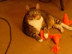 Mostly I just like the way this cat looks. I'm not sure I really want to knit orange traffic cones...
