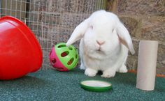 Fun toys for rabbits made from items in your home. Make rabbit toys at no extra cost and keep your bunny entertained for hours. Rabbit Cages, House Rabbit, Rabbit Toys, Pet Rabbit, Diy Bunny Toys, Indoor Rabbit, Bunny Care, Fluffy Bunny, Rabbit Hutches