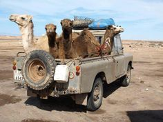 Land Rover. For those who like to keep a pack of cigeretes in the truck !
