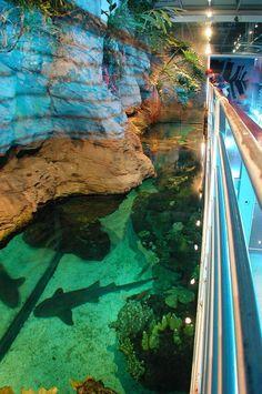 Genoa Aquarium   Genova | Italy | Completed 2001