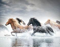 Canvas Artwork, Canvas Art Prints, Icelandic Horse, Island Resort, Sky And Clouds, Nature Scenes, World Cultures, Beautiful Horses, Fine Art Photography