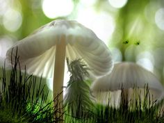 """""""A witch is a woman whose religion is her life and whose life is her art. The art of the green witch is the wise use of the green."""" ~ Susan Weed So beautiful Mushroom Art, Mushroom Fungi, Enchanted, Nature Witch, Green Photo, Fairy Land, Fairy Tales, Fairy Dust, Kitchen Witch"""