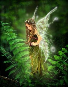 ≍ Nature's Fairy Nymphs ≍ magical elves, sprites, pixies and winged woodland faeries - fae in the ferns Foto Fantasy, Fantasy Art, Magical Creatures, Fantasy Creatures, Fairy Dust, Fairy Tales, Fairy Land, Forest Fairy, Fern Forest