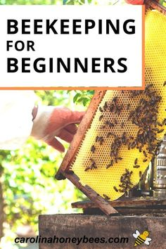 Beekeeping for Beginners - tips and advice to help you get started with beekeeping basics. #carolinahoneybees #beekeepingforbeginners #beekeeper