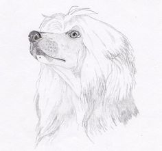 Chinese Crested Powder Puff Note Cards - Gift Set of Eight - Free Shipping US - Original Pencil Art Design - Desert Impressions 8 notecards - $12.95 + free