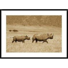"Global Gallery 'Black Rhinoceros and Calf Crossing Savannah' Framed Photographic Print Size: 30"" H x 42"" W x 1.5"" D"
