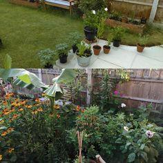 Reddit Gardening Diy Hijyenci On Pinterest