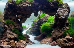 aquascaping poland | Scaper's Tank Contest 2014. 2nd stage