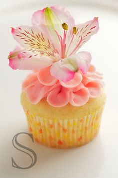 love cupcakes.. here All Recipes