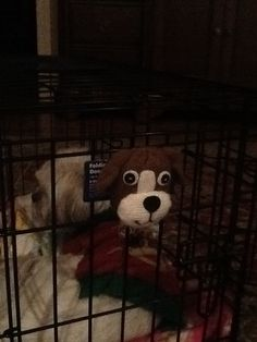 Hang this on to your dog cage! I (didn't make the stuffed dog) I got the stuffed dog from a sock and it fell off so I didn't throw it away I attached it to the cage. Your pet doesn't have to match the stuffed animal.