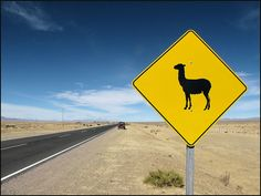 Argentina - beware the guanaco! San Salvador, Mendoza, Gaucho, Bolivia, Places To Travel, Places To See, Visit Argentina, Lake Titicaca, In Patagonia