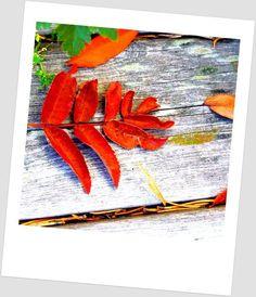 Kodin Kuvalehti – Blogit   Puikkopotut ja kuppisoosi – Porkkanamaasta nousi taas friikkisirkus... Autumn Colours, Art, Art Background, Kunst, Performing Arts, Art Education Resources, Artworks