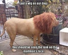 "Funny Pictures Of The Day – 34 Pics (I think the original photo was a ""lion"" a guy ordered)"