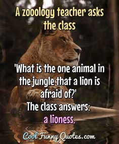 Funny Animal Quotes, Funny Animal Pictures, Funny Animals, Funny Quotes, True Quotes, Great Quotes, Baby Highland Cow, Lioness Quotes, Leo Zodiac Facts