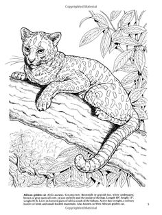 Tiger Coloring Pages And Book Uniquecoloringpages Coloring Pages