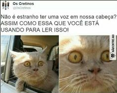 Meus memes Pink Things zoomer x color pink Top Memes, Memes Humor, Wtf Funny, Funny Cute, Comedy Memes, Otaku Meme, Funny Images, I Laughed, Haha