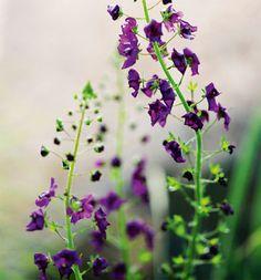 Purppuratulikukka Beautiful, Flowers, Summer, Inspiration, Cottage, Nantes, Biblical Inspiration, Summer Time, Cottages
