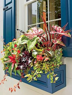 How to Give Your Home Major Southern Charm With Easy Window Boxes - Pflanzideen Window Planters, Flower Planters, Planter Boxes, Tropical Windows, Winter Window Boxes, Purple Petunias, Climbing Hydrangea, Window Box Flowers, Houses