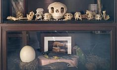Death Becomes It: How the Morbid Anatomy Museum Slayed Brooklyn | Culture | The Guardian