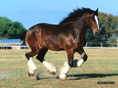 Best Wallpaper in the World | The best top desktop horse wallpapers 22 wallpaper | Horsewallpapers ...