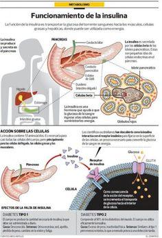 Vive con Diabetes - ¿Cómo funciona la insulina?