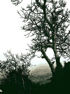 #dark#nature#disappear#here