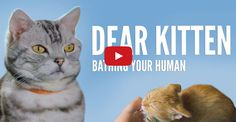 Dear Kitten: Bathing Your Human I love these commercials!!!!