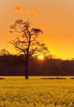 Shades of Gold  | nature | | sunrise |  | sunset | #nature  https://biopop.com/