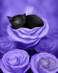 Cat Fairy in #Purple roses