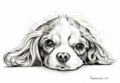 Cavalier King Charles, King Charles Dog, King Charles Spaniel, Animal Sketches, Art Drawings Sketches, Animal Drawings, Cute Dogs And Puppies, Dog Paintings, Dog Tattoos