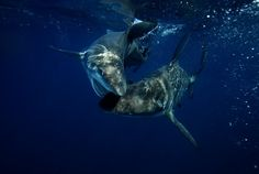 LoveBite by Pelagic Drifter, via Flickr