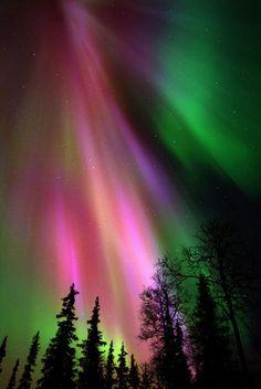 Northern lights (aurora borealis) in Lapland   Finland