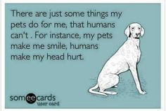 There are just some things my pets do for me that humans can't. For instance, my pets make me smile, humans make my head hurt. Schnauzers, Yorkies, I Love Dogs, Puppy Love, Crazy Dog Lady, Dog Rules, Animal Quotes, Pet Quotes, My Animal
