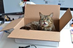 Tip 15: All that laughing can be pretty exhausting, so be sure to have a comfortable box on your desk where you can relax. | 15 Tips To Improve Your Day At The Office (With LilBUB!)