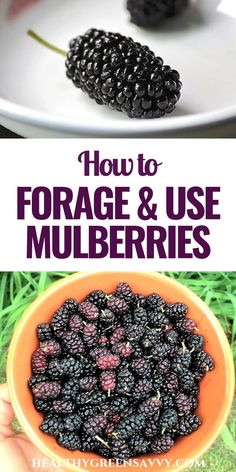 This delicious foraged superfood is full of flavor and healthy antioxidants — and you can probably get it for free from a tree in your neighborhood. All you need to know about foraging and preparing mulberries! Real Food Recipes, Cooking Recipes, Healthy Recipes, Eat Healthy, Superfood, Mulberry Recipes, Edible Plants, Survival Food, Survival Kits