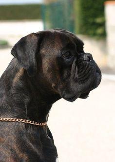 Euro - Training (click here) http://dunway.us/kindle/html/boxer.html #BoxerDog