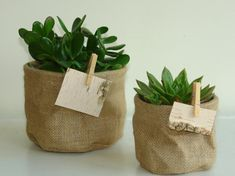 succulent flowers burlap medium planter pot cover birch bark tags rustic wedding burlap favor gift bags wood clip burlap vases via Etsy