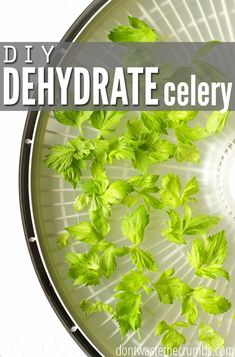 Stop paying for dried celery! Easy recipe and simple tutorial for dehydrated celery using leaves on the celery that you already paid for. Great budget tip to save money on groceries! :: Dontwastethecrumbs.com