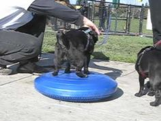 Fun Dog Exercises on the FitPAWS Balance Disc