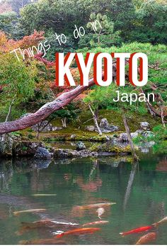 Discover the prettiest city in Japan. From ancient traditions to futuristic architecture and amazing food, Kyoto has it all. Read our guide to make the most of your visit.