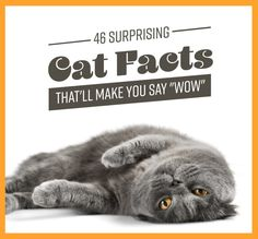 46 Surprising Cat Facts That will Make You Say Wow - actually a great deal of information!