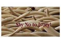 Ivory by netteart   Olioboard