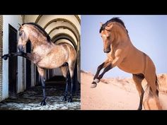"""Cute And funny horse Videos Compilation """"cute moment of the horses"""" Soo ..."""