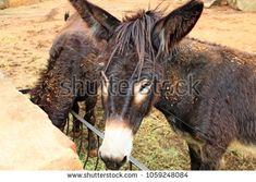Donkey Farm Animal